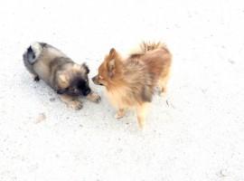 Django Tibby et Plume