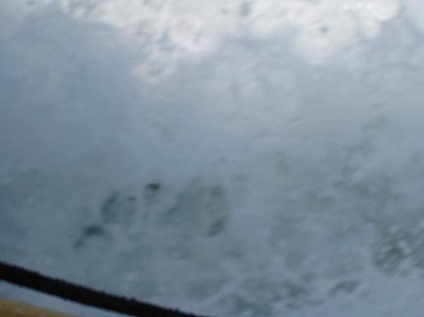 le-bassin-ete-2011 1770