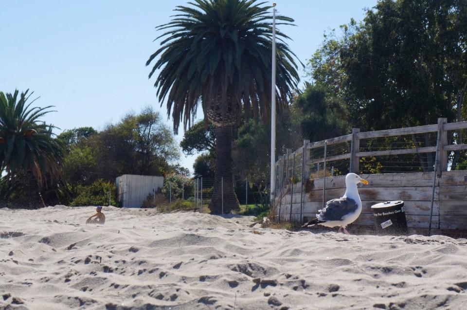 Sterne Malibu Beach