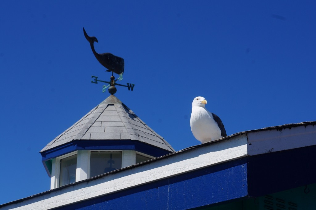 Pier Monterey