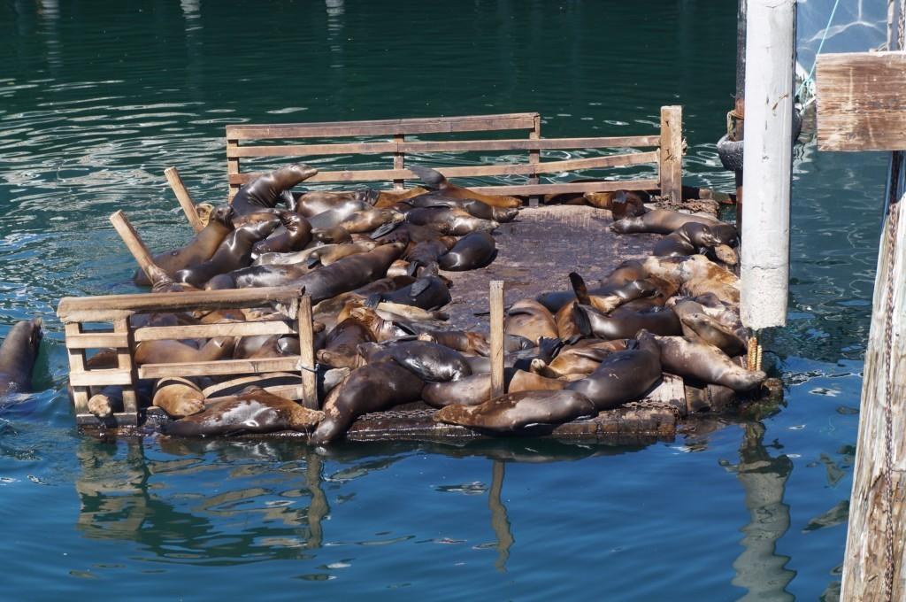 Morses Pier de Monterey