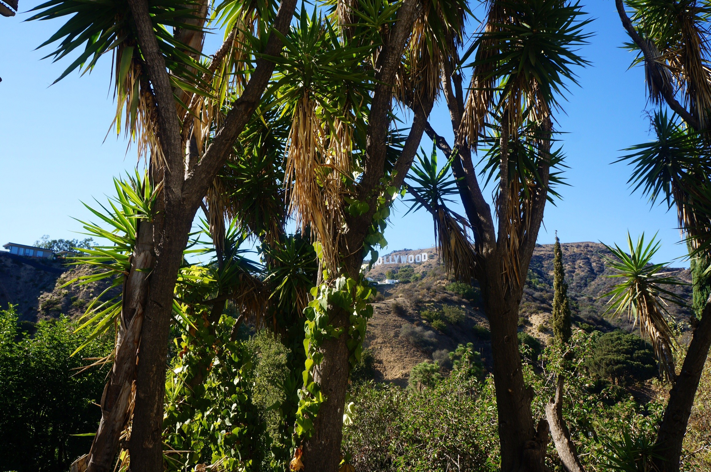 De Beverly Hills à Hollywood !