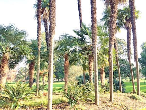 Palmiers Bordeaux