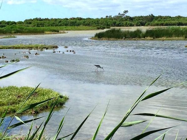 19 Reserve ornithologique du Teich