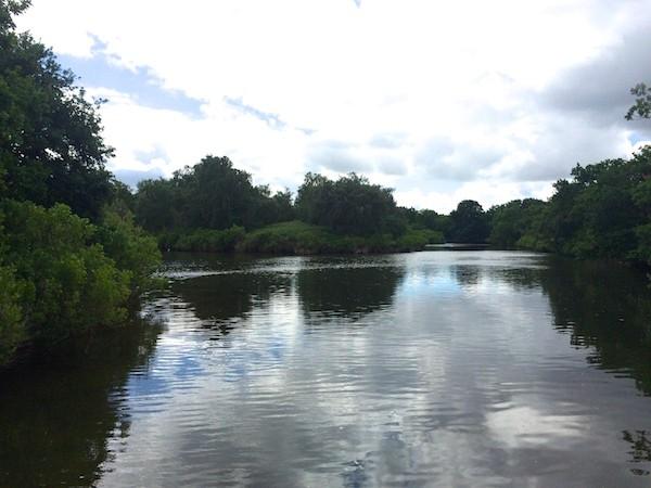Reserve ornithologique du Teich