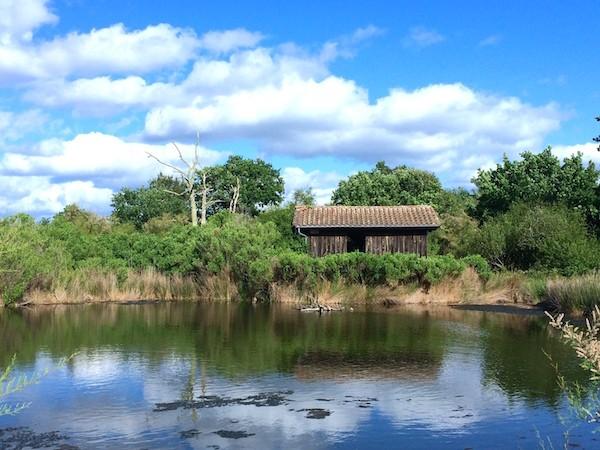 La réserve aux oiseaux sauvages du Teich !