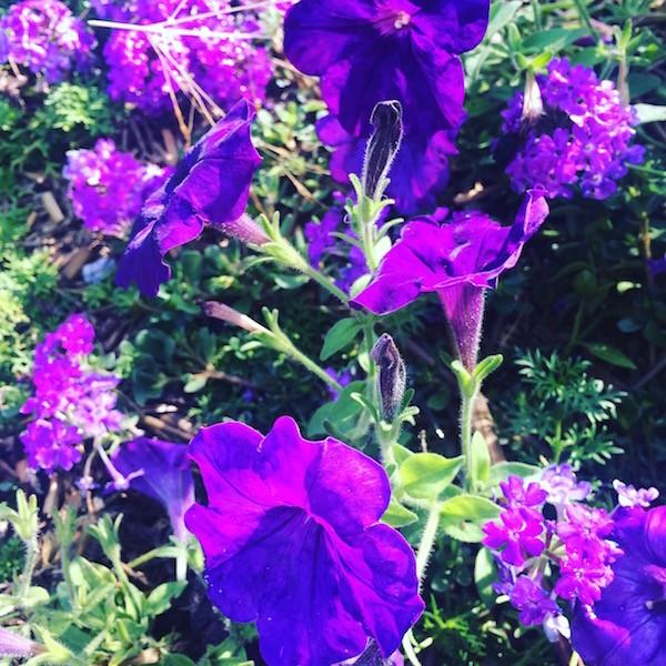 Fleurs des quais Bordeaux
