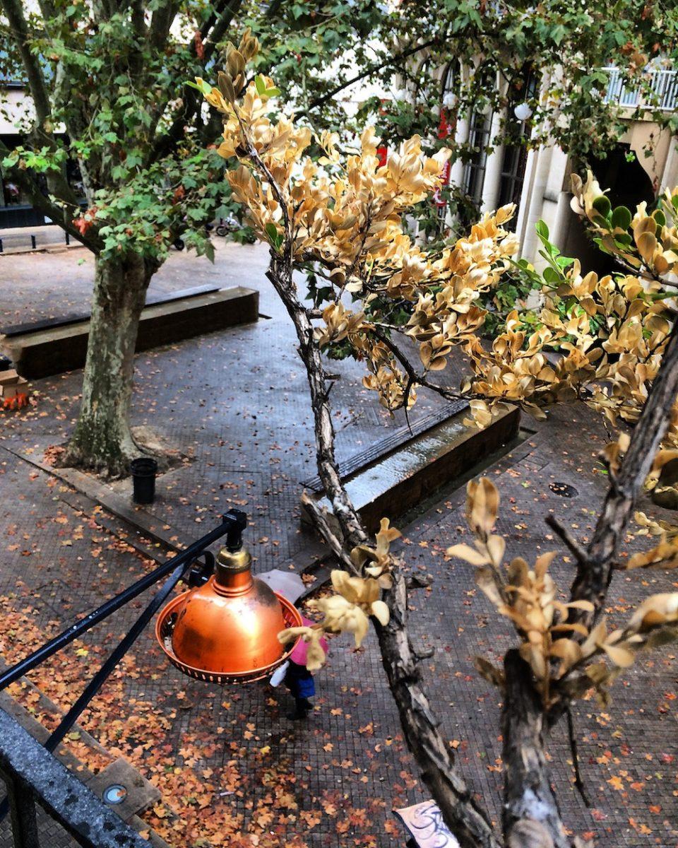 bordeaux-automne-2016