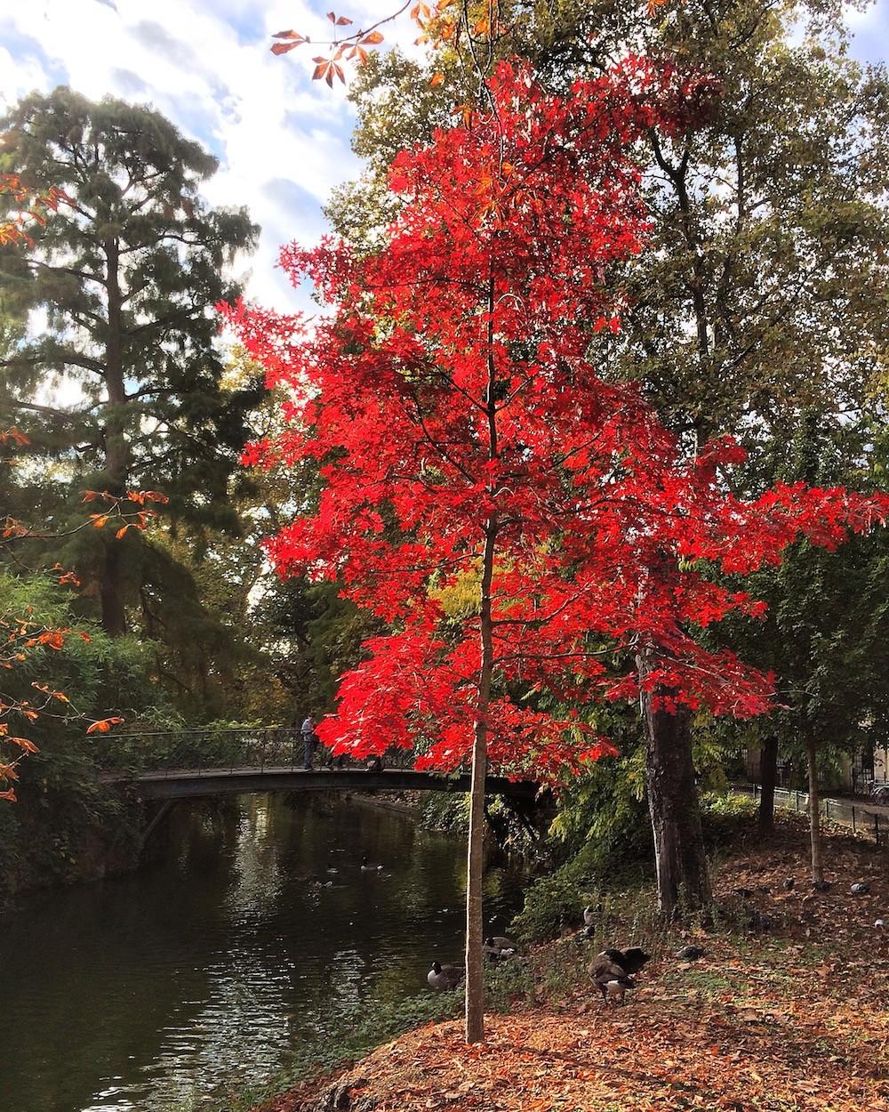 jardin-public-automne-2016-en-harmonie