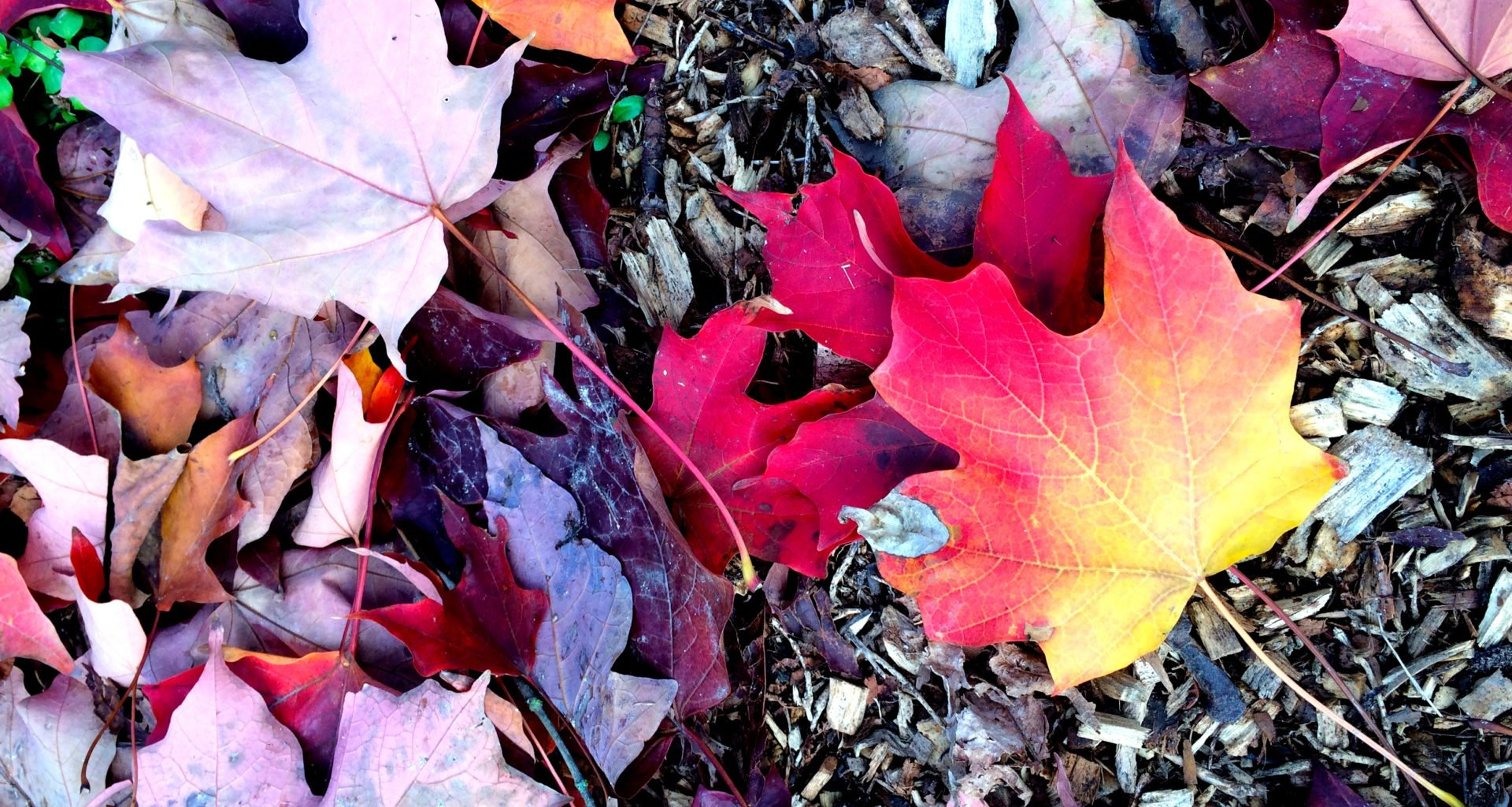feuilles-d-automne-2016