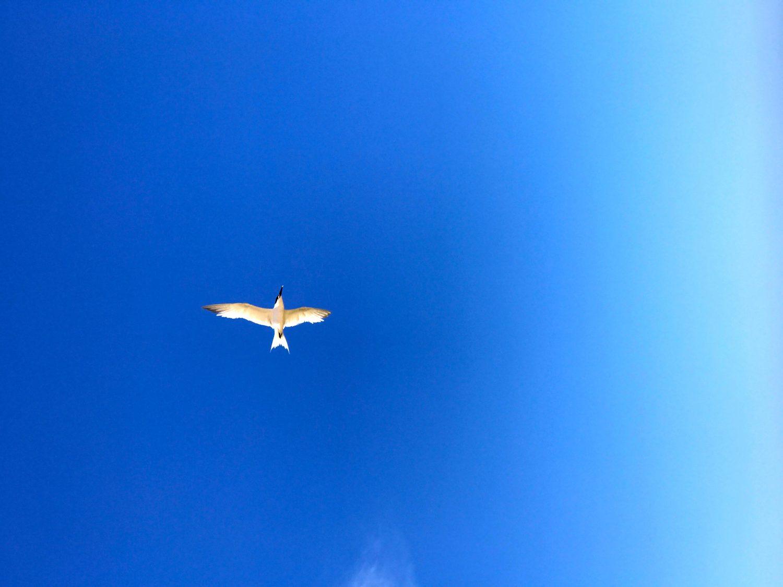 Comme un oiseau !