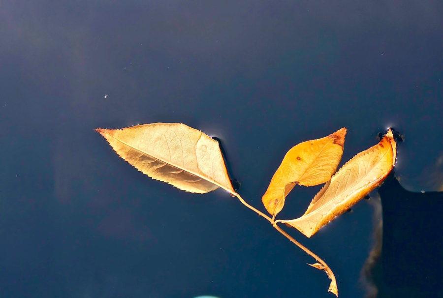 Beautiful colors of autumn !